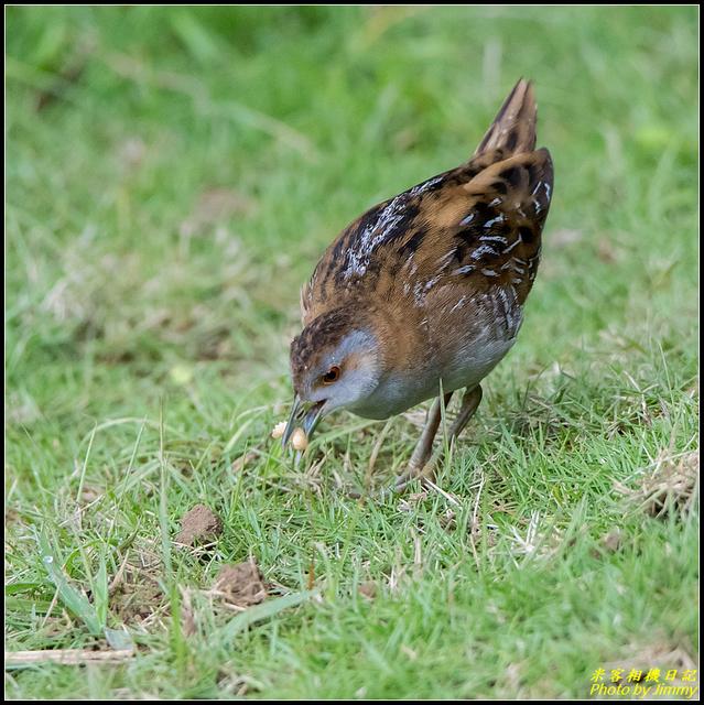 IMG_11.jpg - 野柳稀有鳥種