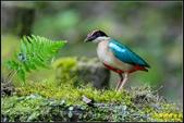 三星龍泉步道‧八色鳥現身:IMG_12.jpg