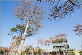 中央大學木棉大道:IMG_15.jpg