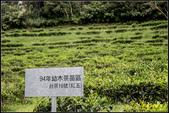 阿薩姆紅茶的故鄉‧日月老茶廠:IMG_03.jpg