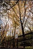 虎頭山公園楓葉:IMG_11.jpg