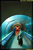 澎湖水族館:IMG_15.jpg