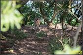 北竿大坵島‧梅花鹿樂園:IMG_17.jpg