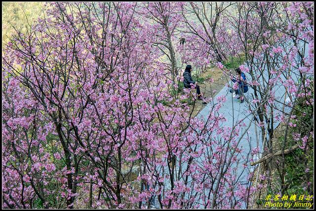IMG_05.jpg - 大熊櫻花林昭和櫻