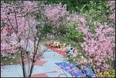 大熊櫻花林昭和櫻:IMG_07.jpg