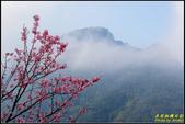 大熊櫻花林昭和櫻:IMG_11.jpg