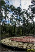 竹子湖‧黑森林:IMG_10.jpg