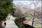 司馬庫斯櫻花季:IMG_10.jpg