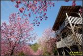 司馬庫斯櫻花季:IMG_12.jpg
