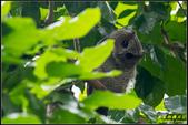 台大領角鴞:IMG_08.jpg