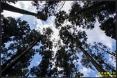 竹子湖‧黑森林:IMG_12.jpg