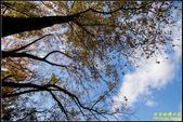 虎頭山公園楓葉:IMG_08.jpg