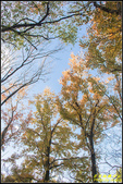 虎頭山公園楓葉:IMG_12.jpg