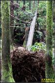 竹子湖‧黑森林:IMG_14.jpg