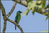 來拍五色鳥‧石門水庫:IMG_14.jpg