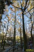 虎頭山公園楓葉:IMG_13.jpg