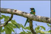 來拍五色鳥‧石門水庫:IMG_15.jpg