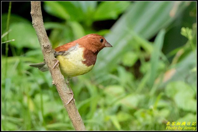 IMG_02.jpg - 野柳稀有鳥種