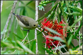 內溝溪綠啄花:IMG_06.jpg