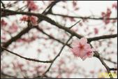 新竹麗池公園.賞櫻記:IMG_06.jpg