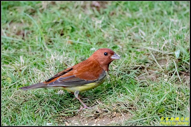 IMG_08.jpg - 野柳稀有鳥種