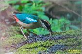 三星龍泉步道‧八色鳥現身:IMG_07.jpg