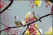 大雪山林道尋鳥記:IMG_09.jpg