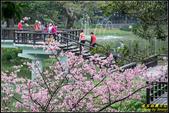 新竹麗池公園.賞櫻記:IMG_20.jpg
