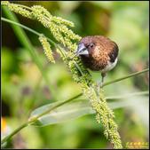 內溝溪綠啄花:IMG_20.jpg
