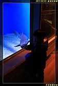 澎湖水族館:IMG_18.jpg