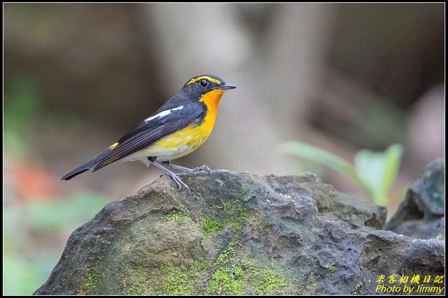 IMG_16.jpg - 野柳稀有鳥種