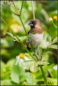 內溝溪綠啄花:IMG_21.jpg