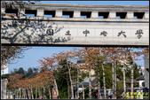中央大學木棉大道:IMG_02.jpg