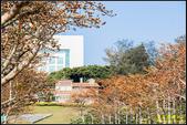 中央大學木棉大道:IMG_10.jpg