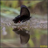 石門水庫‧五色鳥想飛:IMG_16.jpg