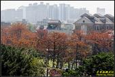 中央大學木棉大道:IMG_12.jpg