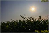 坪林茶園‧日出雲海:IMG_09.jpg