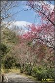 福山120巷‧櫻花百鳥圖:IMG_02.jpg