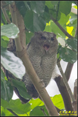台大領角鴞:IMG_13.jpg