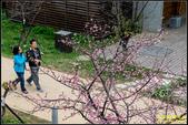 新竹麗池公園.賞櫻記:IMG_10.jpg