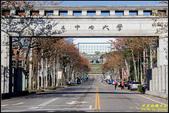 中央大學木棉大道:IMG_01.jpg
