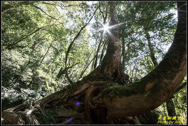 IMG_46.jpg - 拉拉山自然保護區