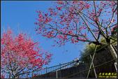彌陀禪寺八重櫻:IMG_14.jpg