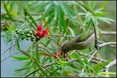 內溝溪綠啄花:IMG_01.jpg