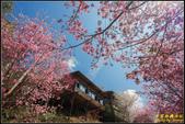 司馬庫斯櫻花季:IMG_15.jpg