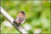 內溝溪綠啄花:IMG_19.jpg