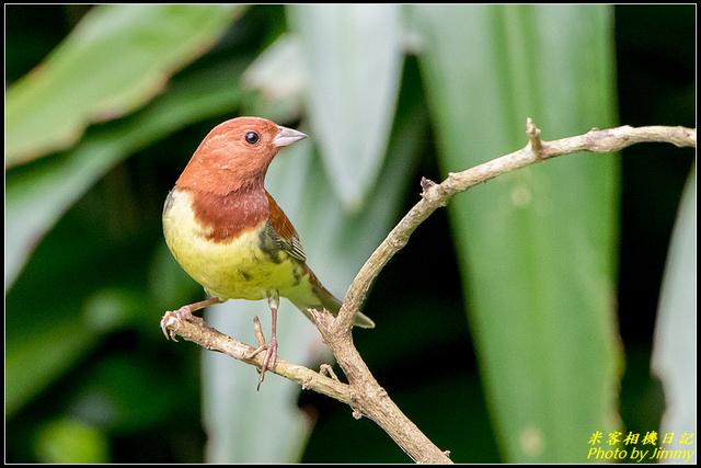 IMG_03.jpg - 野柳稀有鳥種