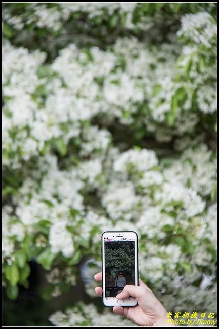 IMG_10.jpg - 龜山大湖紀念公園‧紫藤流蘇齊綻放