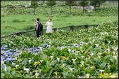大賞園繡球花:IMG_16.jpg
