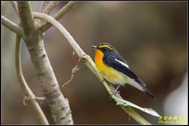 IMG_13.jpg - 野柳稀有鳥種